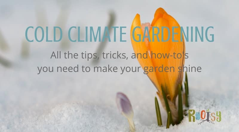 Cold Climate Gardening - All the tips, tricks, and how-to's you need to make your garden shine! Rootsy