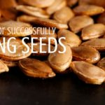 5 Tips for Successfully Saving Seeds