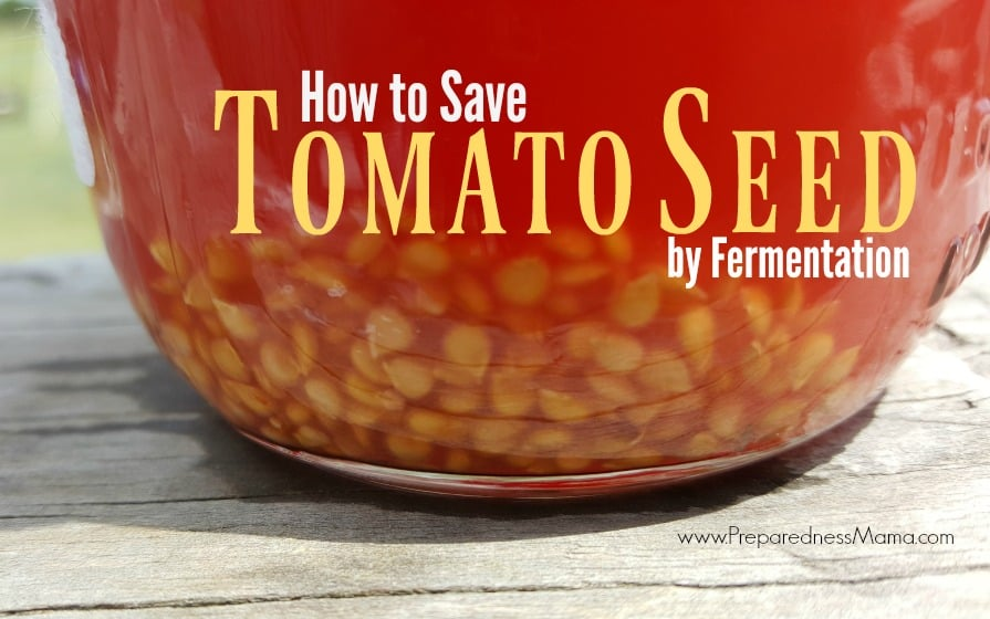 5 Tips for Successfully Saving Seeds - Heirloom Tomato Seed