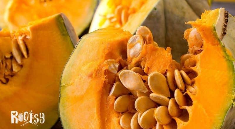 small pumpkin cut open revealing the seeds for saving
