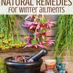 dried herbs to use in herbal remedies for colds