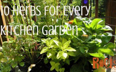 10 Herbs for Every Kitchen Garden