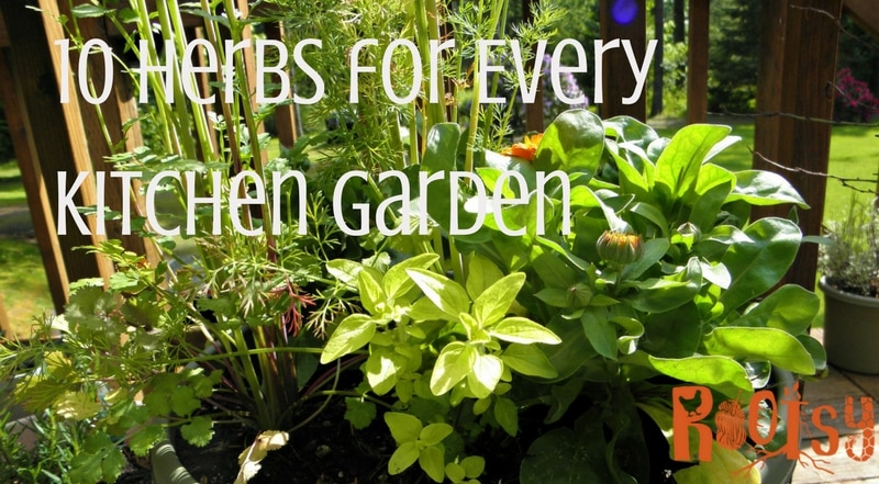 10 Herbs for every kitchen garden + recipes to use them | Rootsy.org