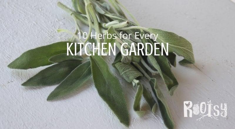 Sage herbs for the kitchen garden.