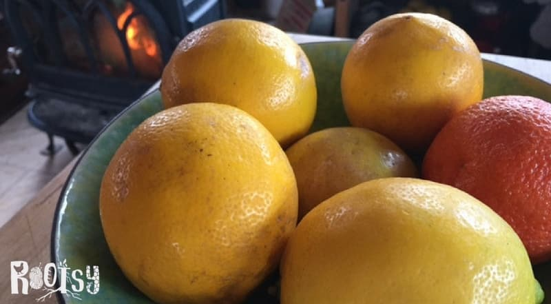 Seasonal Eating in Winter - Citrus are wonderfully seasonal fruits to enjoy in winter | Rootsy.org