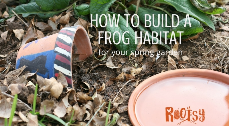 How to build toad and frog habitats