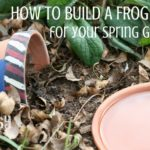 How to build a frog habitat to benefit your garden | Rootsy.org