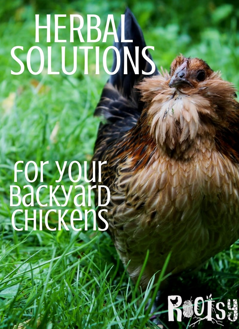 You can offer your chickens herbal solutions that are aesthetically pleasing in place of chemical medications. See the herbs I love to use with my flock.