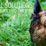 You can offer your chickens herbal solutions that are aesthetically pleasing in place of chemical medications. See the herbs I love to use with my flock. | Rootsy