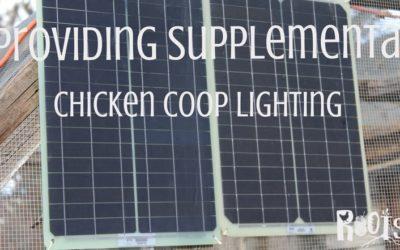 Providing Supplemental Chicken Coop Lighting