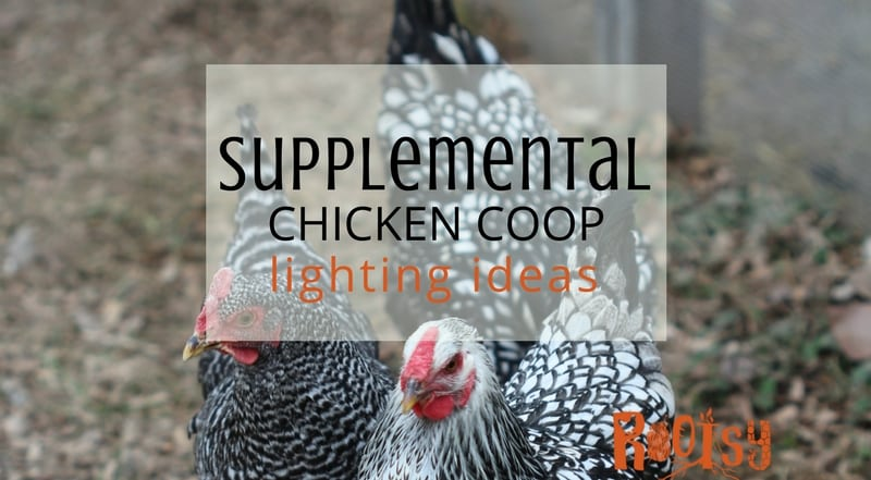 Providing Supplemental Chicken Coop Lighting
