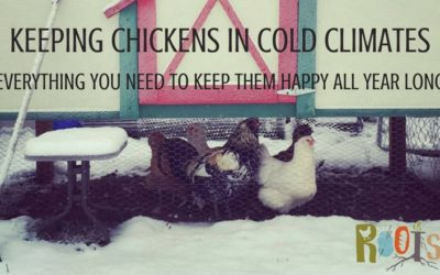 Keeping Chickens in Cold Climates