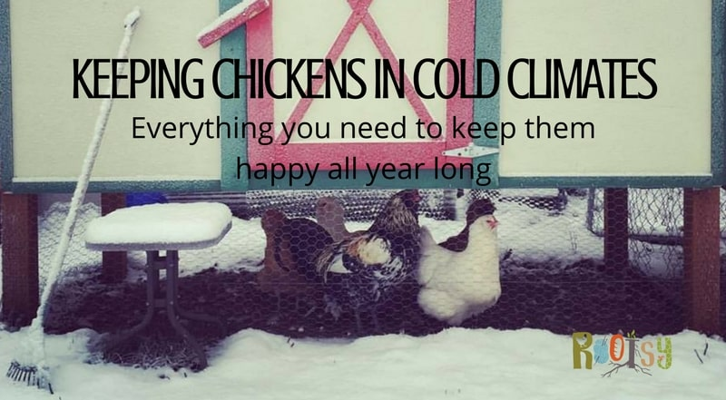 Keeping Chickens in Cold Climates - Everything you need to keep them happy all year long - Rootsy