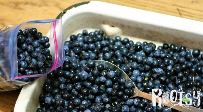 When the harvest is coming in heavy, it's often hard to know exactly what to do with it all. After all, your family can only eat so many jars of jelly in a year. Fortunately, there are many ways of preserving food so that your family can have a variety of food from your garden all year long | Rootsy.org