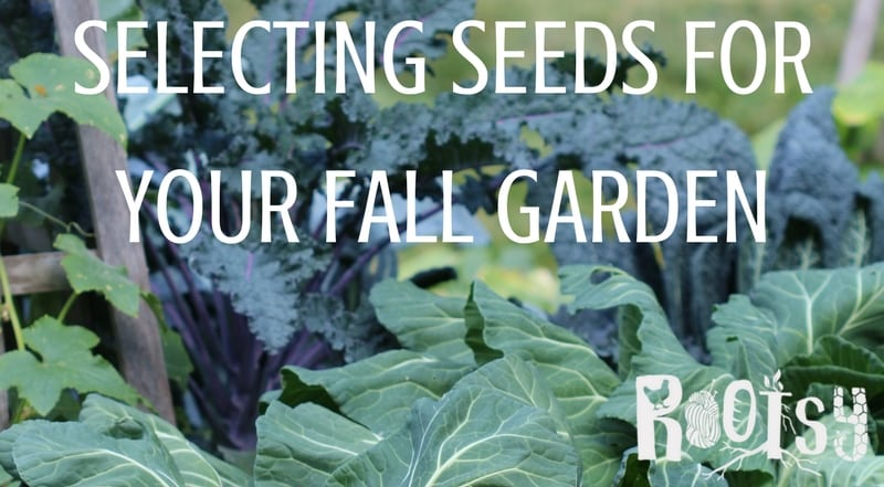 The growing season need not end with the Autumn harvest! Selecting seeds for the fall garden is the first step to successful year-round growing.| Rootsy