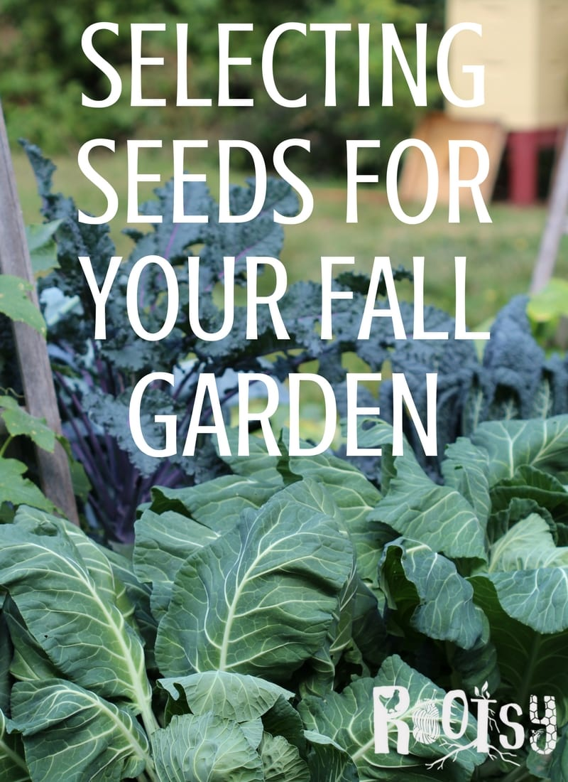 The first step to an abundant year round harvest is selecting seeds for your fall garden | Rootsy