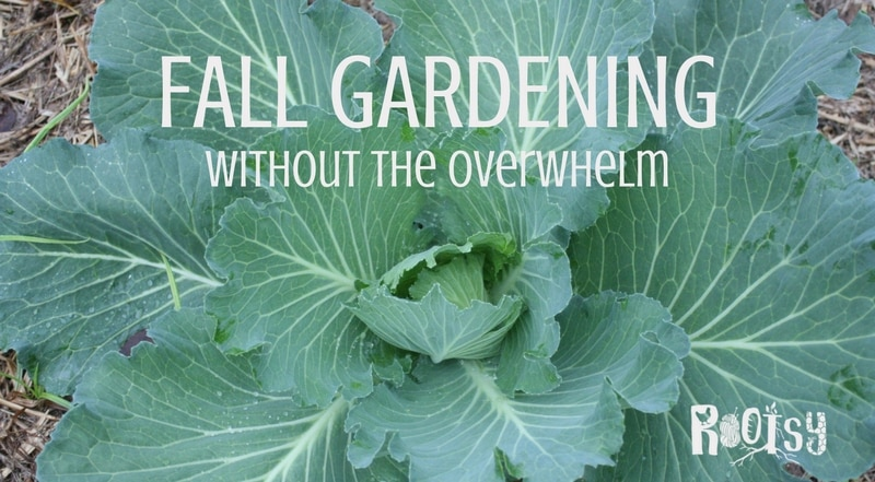 Do you think fall gardening is too much work? It doesn't have to be. Learn how to grow food for your family in the fall in any gardening zone   Rootsy.org
