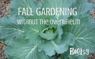 Fall Gardening – without the overwhelm
