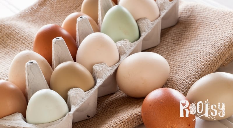image of colorful eggs in cardboard egg carton for sale