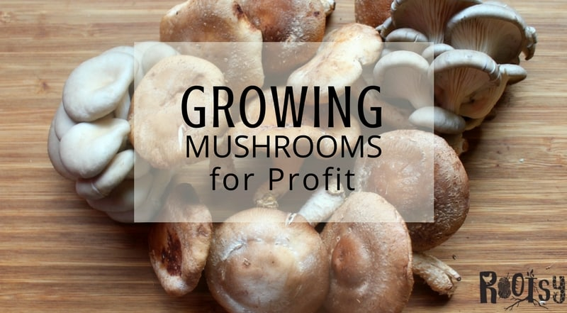 Looking for a way to make additional money on the homestead? Growing mushrooms for profit may be the answer. Start with one of these four reliable varieties and explore the possibilities | Rootsy.org