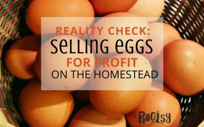 The Reality of Selling Eggs from Your Homestead