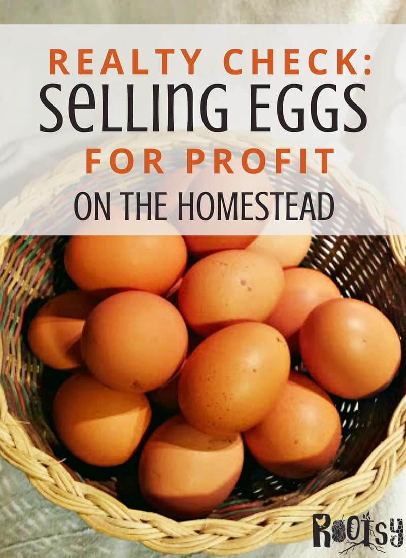 While homesteading is a satisfying life, earning money from your endeavors can be hard. Selling eggs from your homestead is an easy way to help with costs and offset the expenses of the homestead | Rootsy.org