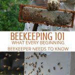 beekeeper inspecting beehives