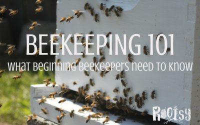 Beekeeping 101 – What every beginning beekeeper needs to know