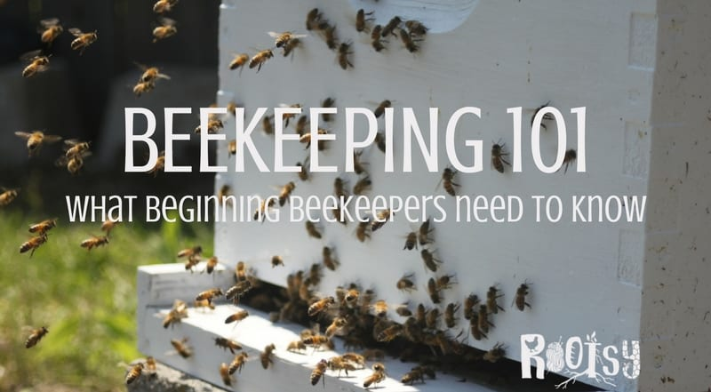 Beekeeping 101 – What beginning beekeepers need to know
