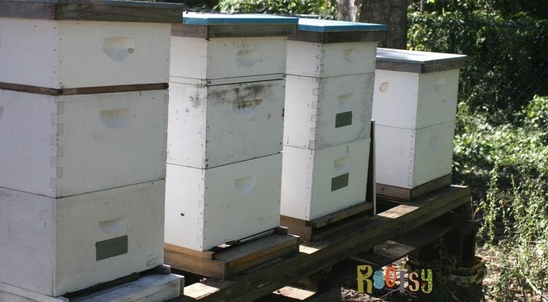 image of backyard apiary