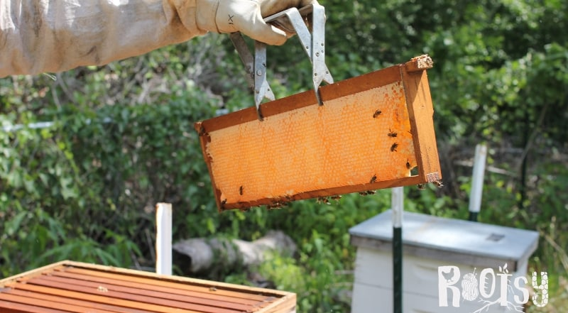 image of beehive frame filled with honey
