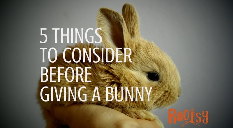 5 Things to Think About Before Giving a Bunny for Easter