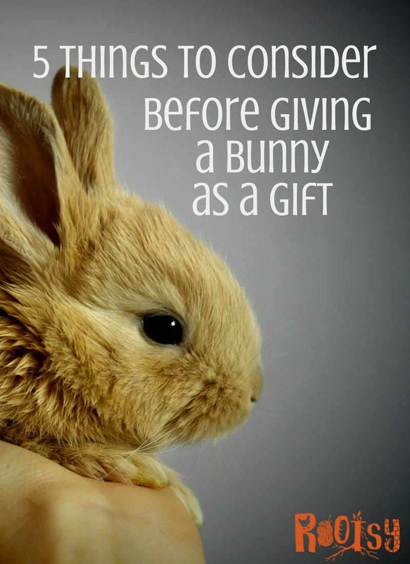 Adorable baby bunnies and fluffy little chicks can sure be tempting. It may seem like a good idea to bring them home as the perfect present for an Easter basket. Here are 5 things to think about before giving a bunny as a gift | Rootsy.org