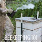 young beekeeper smoking bee hive to harvest honey