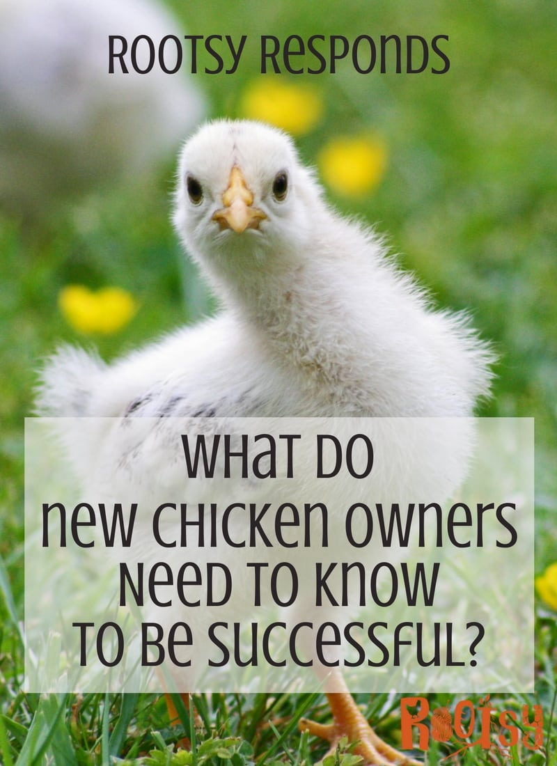 The Rootsy Community is awesome! This month's Community Supported Answer (CSA) is about backyard chickens. We wantyou to share your success tips and help beginners who are raising backyard chickens for the first time | Rootsy.org