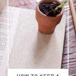 A closed book with a small clay pot with growing seedling sitting on top surrounded by a pencil, coins, and coffee cup with text overlay stating: how to keep a garden journal.