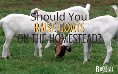 Should You Raise Goats on the Homestead?