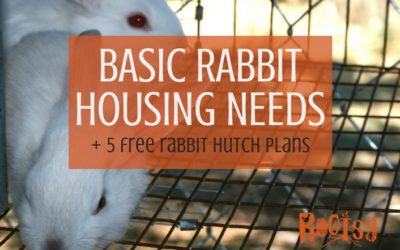 Basic Rabbit Housing Needs + 5 Free Rabbit Hutch Plans
