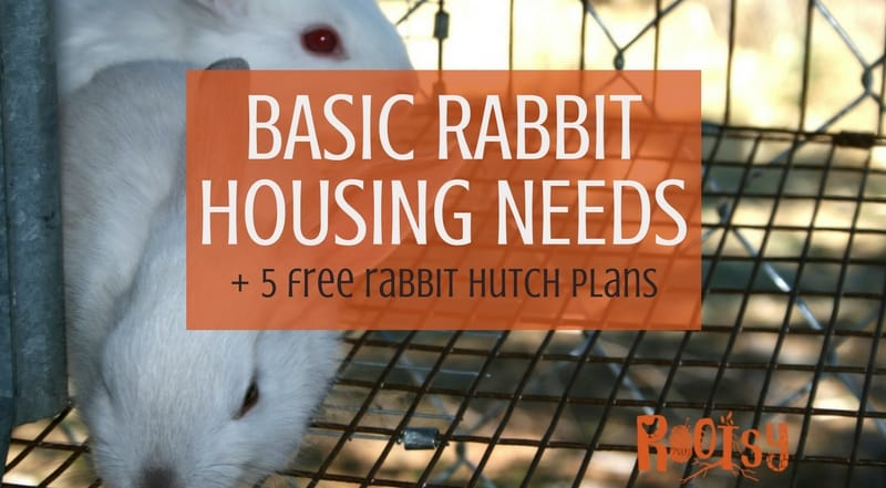 Basic Rabbit Housing Needs + 5 Free Rabbit Hutch Plans