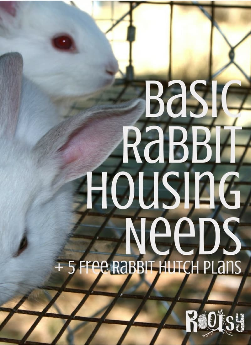 There is no one style of rabbit housing that is suitable for all situations, but there are certain basic rabbit housing needs that should be met regardless of the type of housing used | Rootsy.org