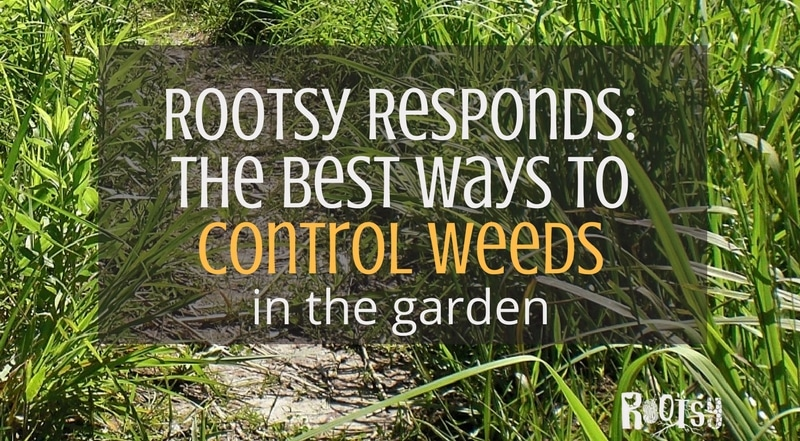 Even careful gardeners know that unwanted weeds will creep into their garden. It can be a challenge to control them in an environmentally safe way. How do you control weeds in the garden? This month The Rootsy Community comes together to bring their best ideasto the table. We call it CSA, Community Supported Answers! Leave your comments in the post.
