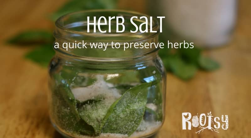 Fresh sage herb salt in glass jar. Herbs are easy to grow and produce quite a bit, however, they don't grow year round. Herb salt is a wonderful way to preserve your herb harvest. Learn how to make endless herbal salt combinations today | Rootsy.org