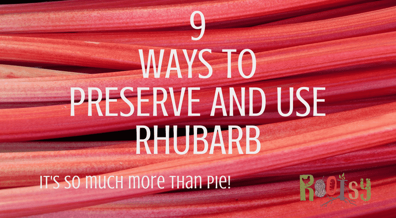 Rhubarb, that early rising perennial that you can completely ignore and know it will keep coming back in garden zones 3 to 8. With such a prolific producer, the more ways to preserve and use rhubarb you know the better! - Rootsy
