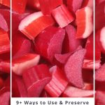 How to Use and Preserve Rhubarb