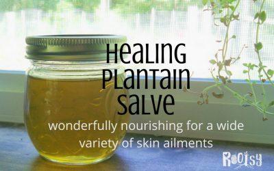 Healing Plantain Salve Recipe