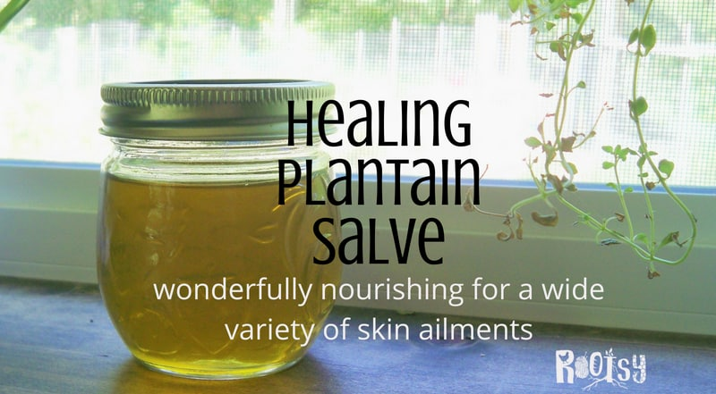 Healing Plantain Salve Recipe