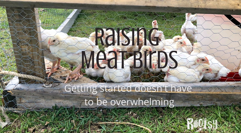 Raising Your Own Meat Birds