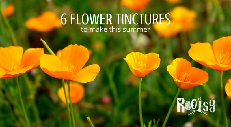 Poppies for flower tinctures. Summer is often the season of abundance. This abundance applies as much to food as it does to herbal remedies. Make these flower tinctures as they bloom this summer and be ready to care for a variety of ailments in the seasons ahead.