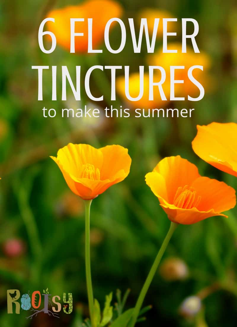 Poppies for flower tincture. Summer is often the season of abundance. This abundance applies as much to food as it does to herbal remedies. Make these flower tinctures as they bloom this summer and be ready to care for a variety of ailments in the seasons ahead.