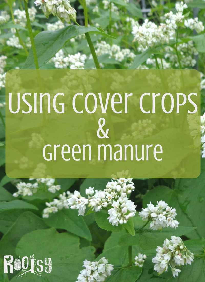 Cover crops are an easy way to suppress weeds, build soil and attract beneficial insects. Learn how to grow buckwheat, Austrian peas, rye, oats, and hairy vetch to cover bare soil and use as green manure.